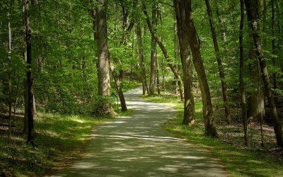 YWCA Greenway Trail